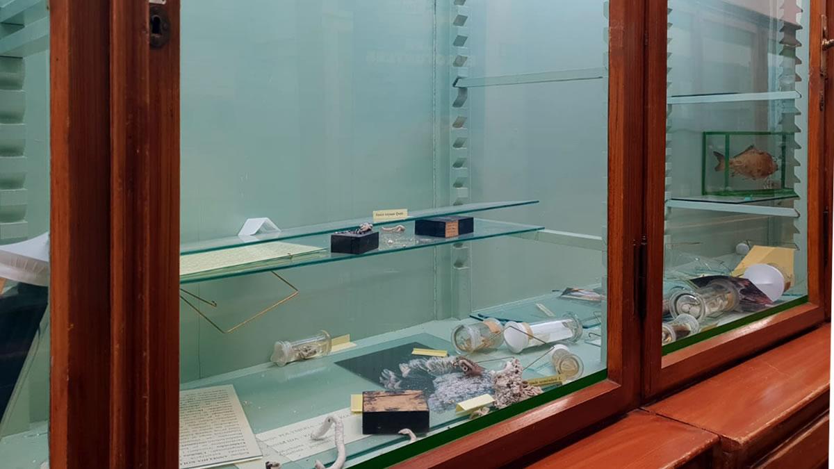 hrvatski prirodoslovni muzej zagreb - oštećenja nakon potresa - 2020