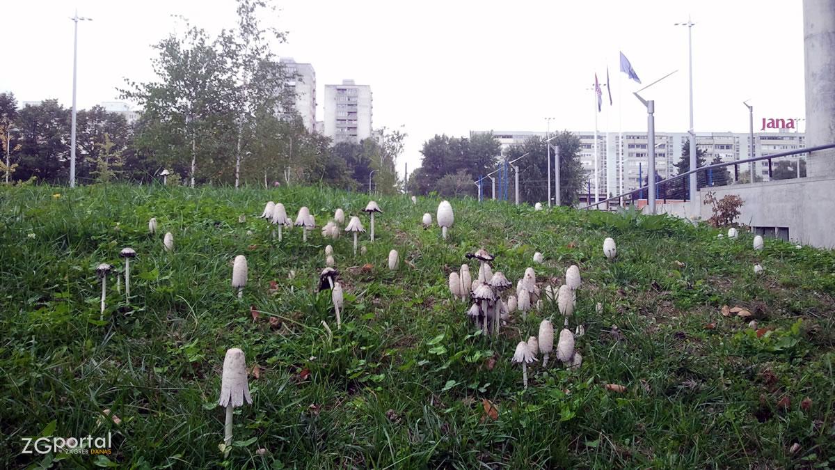 gljive u parku - muzej suvremene umjetnosti zagreb - rujan 2013.