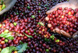 international coffee partners 2020