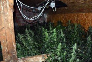 marihuana - laboratorij za uzgoj - 2020