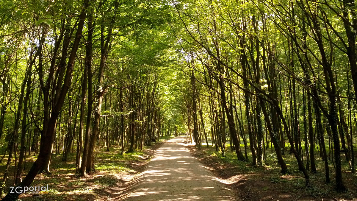 park - šuma maksimir, zagreb - srpanj 2014.